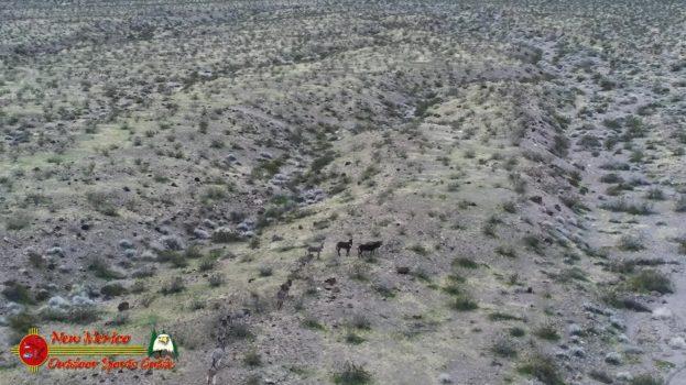 Wild Burros Lake Mohave Arizona