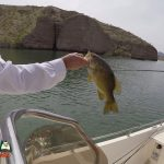 Lake Mohave Smallmouth Bass Fishing 03-31-2020