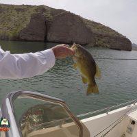 Lake Mohave Smallmouth Bass Fishing 03-31-2020