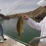 Lake Mohave Smallmouth Bass Fishing April 16, 2020