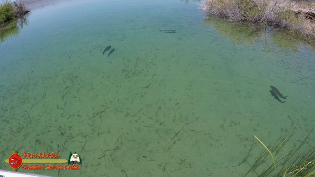 Lake Mohave Carp Overpopulation Harmfull to Spawning Bass