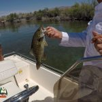 Bass Fishing Lake Mohave April 27, 2020